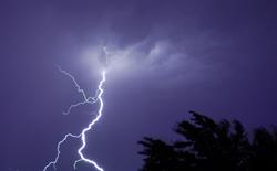 lightning_trees
