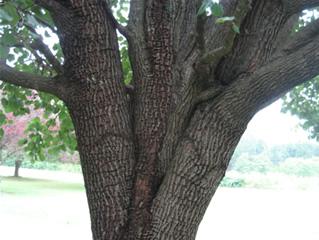tree_hurricane001